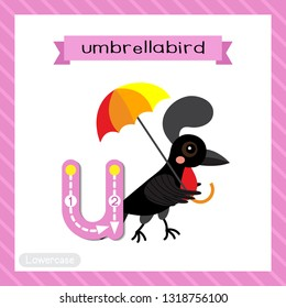 Letter U lowercase cute children colorful zoo and animals ABC alphabet tracing flashcard of Umbrellabird for kids learning English vocabulary and handwriting vector illustration.