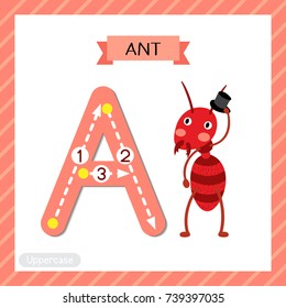 Letter A uppercase cute children colorful zoo and animals ABC alphabet tracing flashcard of fire ant with hat for kids learning English vocabulary and handwriting vector illustration.