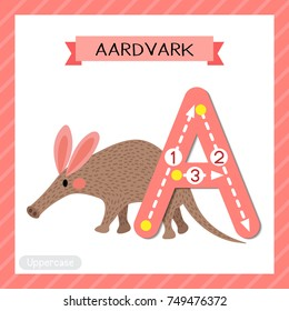 Letter A uppercase cute children colorful zoo and animals ABC alphabet tracing flashcard of Walking Aardvark for kids learning English vocabulary and handwriting vector illustration.