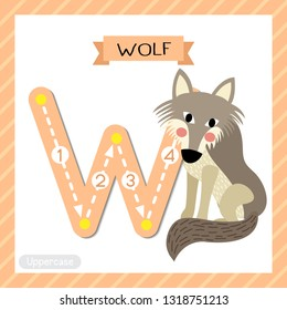 Letter W uppercase cute children colorful zoo and animals ABC alphabet tracing flashcard of Wolf for kids learning English vocabulary and handwriting vector illustration.