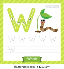 Letter W uppercase tracing practice worksheet with worm for kids learning to write. Vector Illustration.