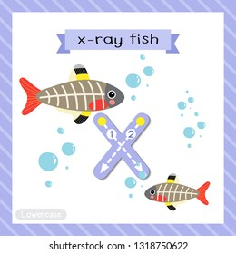 Letter X lowercase cute children colorful zoo and animals ABC alphabet tracing flashcard of X-ray Fish for kids learning English vocabulary and handwriting vector illustration.