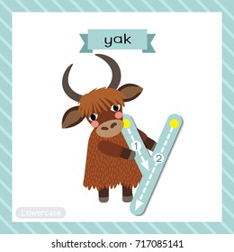 Letter Y lowercase cute children colorful zoo and animals ABC alphabet tracing flashcard of Yak standing on two legs for kids learning English vocabulary and handwriting vector illustration.