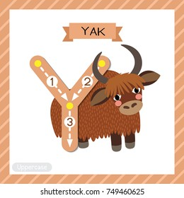 Letter Y uppercase cute children colorful zoo and animals ABC alphabet tracing flashcard of Yak for kids learning English vocabulary and handwriting vector illustration.