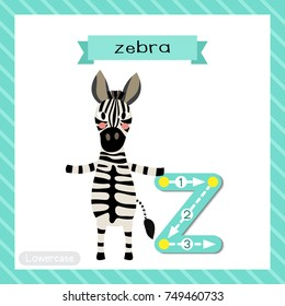 Letter Z lowercase cute children colorful zoo and animals ABC alphabet tracing flashcard of Zebra standing on two legs for kids learning English vocabulary and handwriting vector illustration.