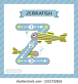 Letter Z uppercase cute children colorful zoo and animals ABC alphabet tracing flashcard of Zebrafish for kids learning English vocabulary and handwriting vector illustration.