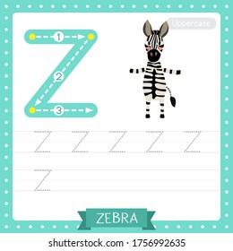 Letter Z uppercase cute children colorful zoo and animals ABC alphabet tracing practice worksheet of Zebra for kids learning English vocabulary and handwriting vector illustration.