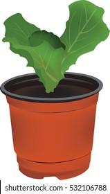 lettuce seedlings on the white background