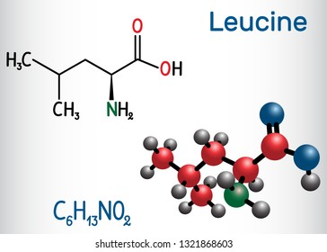 Leucine ( L- leucine,  Leu,  L)  molecule. It is essential amino acid.  Structural chemical formula and molecule model. Vector illustration