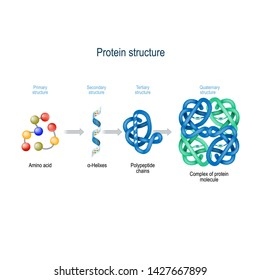 Levels of protein structure from amino acids to Complex of protein molecule. Protein is a polymer(polypeptide) that formed from sequences of amino acids