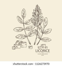 Licorice: licorice plant, flowers and licorice root. Cosmetics and medical plant. Vector hand drawn illustration.