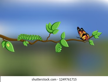 Life cycle of butterfly with eggs, caterpillar, pupa, butterfly shown on a tree branch on natural blurred background. Metamorphosis. Cartoon vector illustration.
