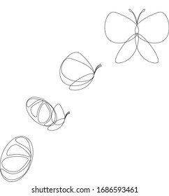 Life cycle of butterfly outline. Transformation of butterfly.