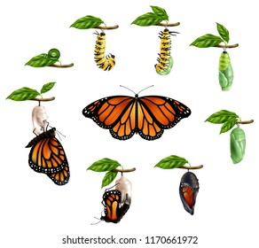 Life cycle of butterfly realistic icons set of caterpillar larva pupa imago phases vector illustration