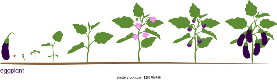 Plant Life Cycle Images  Stock Photos  U0026 Vectors