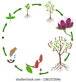 Life Cycle Tree Images Stock Photos Vectors Shutterstock