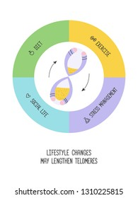 Lifestyle changes may lengthen telomeres. Diet, exercises, stress management, social life. Anti aging. Vector illustration