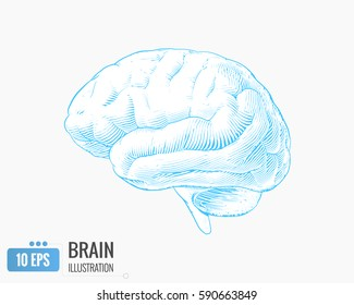 Light blue engraving brain side view illustration isolated on white background