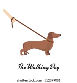 Light Brown Dachshund with a leash