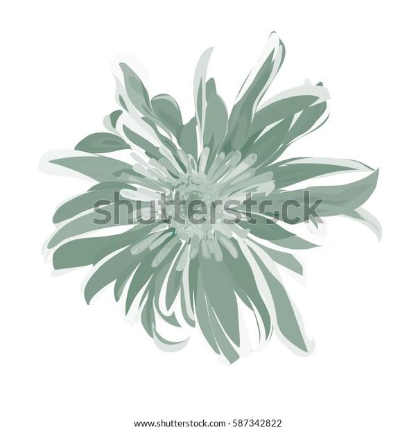light gray  hand drawn chrysanthemum. isolated vector flower