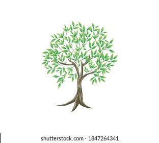 light olive tree with thin branches, tree vector image for design element.