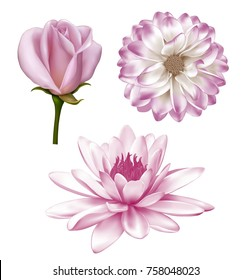 Light pink Mona Lisa flower, Spring Gerber and rose flower. Lotus lily isolated on white background. illustration of pastel Dahlia flower,
