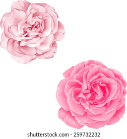 Single pink flower images stock photos vectors shutterstock light pink rose flower isolated on white background mightylinksfo