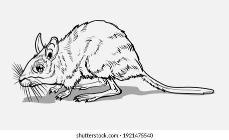 Light Small Jumper. A jerboa, a small animal, a field yellow mouse with a very long tail.Coloring page for children and adults, hand drawn illustration