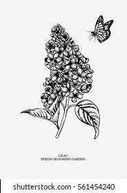 Lilac branch. Floral background. Vector illustration.