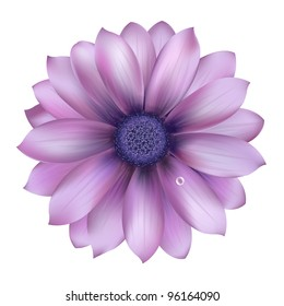Lilac Flower With Water Drop