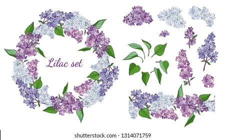 Lilac flowers isolated on white background. Floral elements and seamless brush for your design.