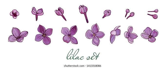 Lilac. Individual lilac flowers for scrapbooking. Light and realistic colors for design. Spring elements for romantic illustrations. Hand-drawn