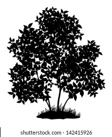 Lilac tree with leaves and grass, black silhouette on white background. Vector