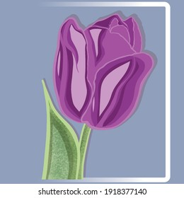 Lilac tulip. Flowers. Flower drawing. A bright plant. Petals. Gift for March 8th. Flowers for a gift. Vector illustration of a tulip. Flower in a frame. Abstract flower.