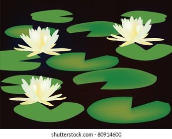 lilies on black water