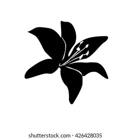 lilly flower silhouette on white background