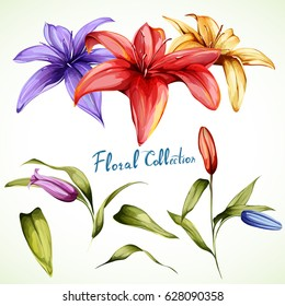 Lilly illustration. Set of three flower with leaves and buds. Watercolor, hand drawn.
