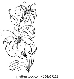 Lily flower isolated over white. Vector illustration.