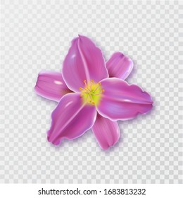 A lily flower with a shadow on an isolated transparent background.3D ornament.Element for design. Realistic vector illustration.