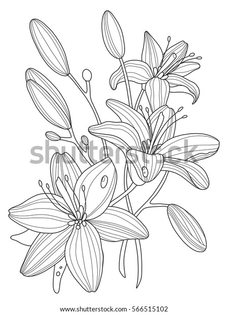 Lily Flowers Coloring Book Vector Illustration Stock ...