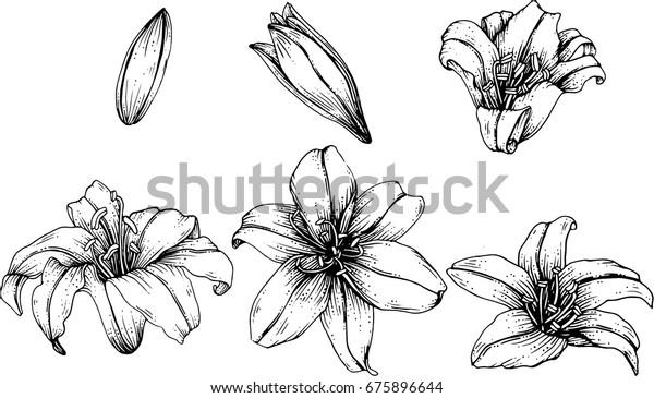 blomster sort hvid - Google-søgning   Blomster, Sort hvid, Sort