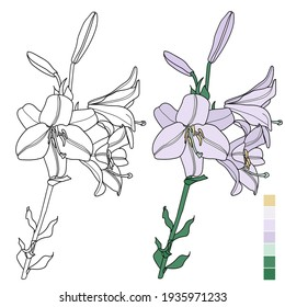 Lily line and in color. Vector image. Flower coloring book with example and palette. Botanical illustration.