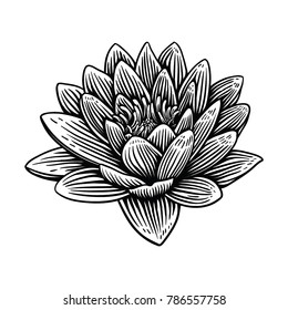 Lily lotus water flower illustration hand drawn. Vintage woodcut engraved etching style