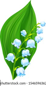 Lily of the valley flower with flowers and leaf. Vector plant, realistic botanical illustration