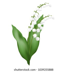 Lily of the valley flowers (may bells, Convallaria majalis). Realistic vector illustration isolated on white background.