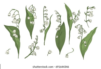 Lily of the valley realistic collection. Hand drawn buds, leaves and stems set. Colorful vector illustration.