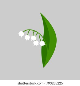 Lily of the valley. Vector illustration.