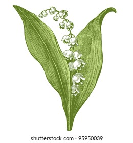 "Lily of the valley - vintage engraved illustration - ""Dictionnaire encyclopedique universel illustre"" By Jules Trousset - 1891 Paris"