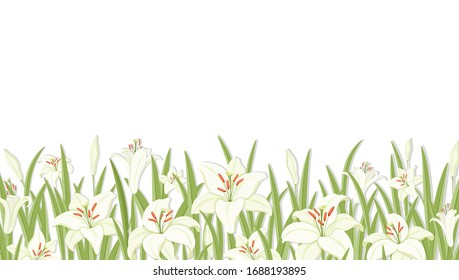 Lilys. Flower background. White lilies with green foliage. Symbol of Easter, spring and love. Template for a greeting or wedding invitation background. Horizontal border. Isolated. Vector illustration