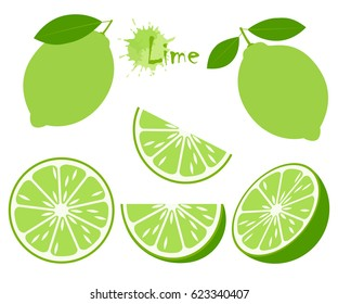 Lime with green leaves, slice citrus isolated on white background. Tropical fruits. Raw and vegetarian food. Vector illustration.